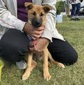 【写真更新】水路から救出。仔犬の家族を大募集!