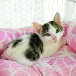 保護猫譲渡会 サムネイル2