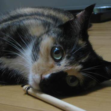 猫じゃらしで遊び疲れて~