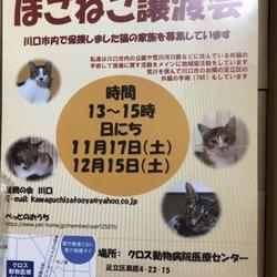 動物病院でのほごねこ譲渡会