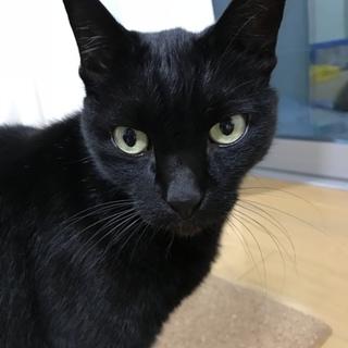 人見知りなく、人懐こい黒猫です!