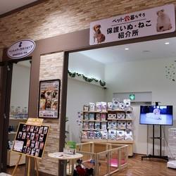 保護猫の譲渡会☆お台場ヴィーナスフォート