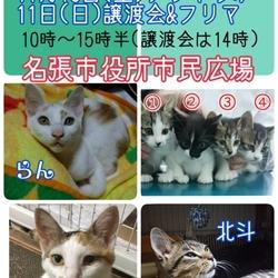 猫の譲渡会&フリマ 三重県名張市