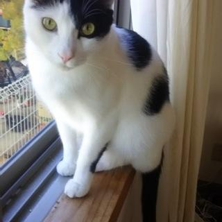 白黒パンダを縁側猫にしてください