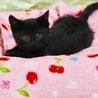 可愛い慣れ慣れ黒猫1ヶ月