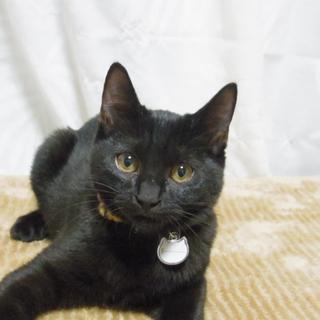おとなしめで優しい性格の黒猫くんです