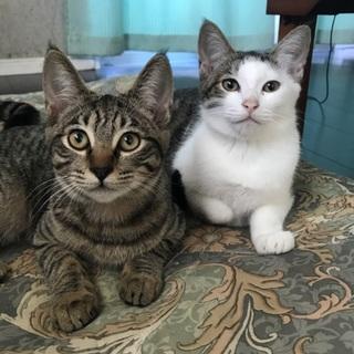 ‼️沖縄発島ネコ‼️