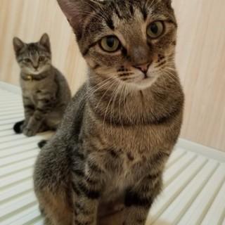 """メスなのに""""いもたろう""""と命名された猫の里親募集"""