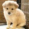 ♡656 可愛い子犬です。