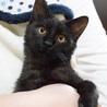 かわいすぎる黒猫こねこさん!