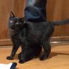 かわいすぎる黒猫こねこさん! サムネイル3