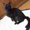 かわいすぎる黒猫こねこさん! サムネイル4