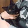かわいすぎる黒猫こねこさん! サムネイル6