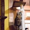 アメショ模様のキジトラ猫ケイタくん サムネイル4