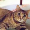 のんびりぽっちゃり麦わら猫のスモモちゃん サムネイル4