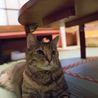 のんびりぽっちゃり麦わら猫のスモモちゃん サムネイル5