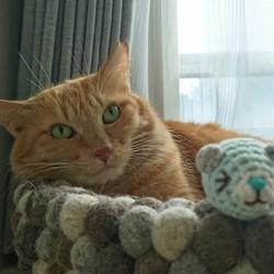 「【大人の猫は慣れるのか】~7ケ月目~」サムネイル2