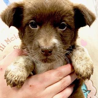 ★659 可愛い子犬です。