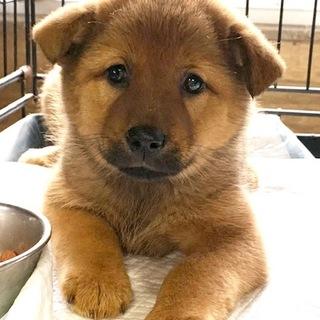 ♡677 可愛い子犬です。