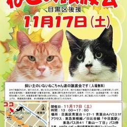★11月17日(土)「ねこの譲渡会 目黒区後援」smile cat@中目黒(室内)