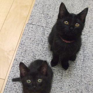 甘えっ子の黒猫ちゃん!!