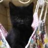 慣れて可愛い黒猫の女の子ゴマちゃん サムネイル3
