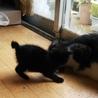 慣れて可愛い黒猫の女の子ゴマちゃん サムネイル4