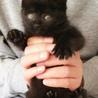 慣れて可愛い黒猫の女の子ゴマちゃん サムネイル5