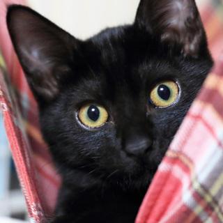 黒猫はインスタ映えしないなんて誰が言ったの!