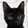 黒猫はインスタ映えしないなんて誰が言ったの! サムネイル3