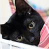 黒猫はインスタ映えしないなんて誰が言ったの! サムネイル2