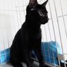 黒猫はインスタ映えしないなんて誰が言ったの! サムネイル4