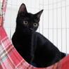 黒猫はインスタ映えしないなんて誰が言ったの! サムネイル5
