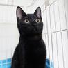 黒猫はインスタ映えしないなんて誰が言ったの! サムネイル6