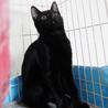 黒猫はインスタ映えしないなんて誰が言ったの! サムネイル7