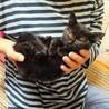 ☆まだ人が怖い子猫☆ サムネイル3