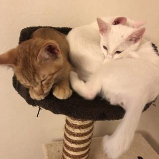子猫3匹の内2匹を選んで下さい。