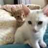 子猫3匹の内2匹を選んで下さい。 サムネイル2