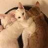 子猫3匹の内2匹を選んで下さい。 サムネイル4