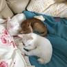 子猫3匹の内2匹を選んで下さい。 サムネイル5
