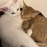 子猫3匹の内2匹を選んで下さい。 サムネイル6