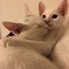 子猫3匹の内2匹を選んで下さい。 サムネイル7