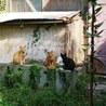 子猫達を野良から救ってください! サムネイル3