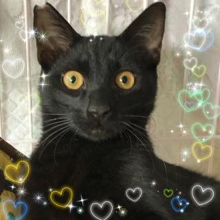 クリクリお目々の黒猫5ケ月☆花道君