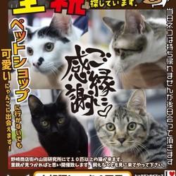 にゃんこのみち主催 第4回 猫の譲渡会