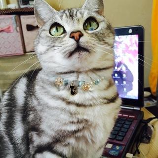 仙台市内で猫の里親さん募集