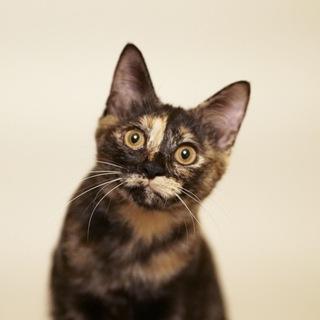 人が大好きなサビ猫ちゃんです