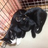 きれいな黒猫 5ヶ月 サムネイル5