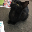 【小柄】短いしっぽの黒猫女の子