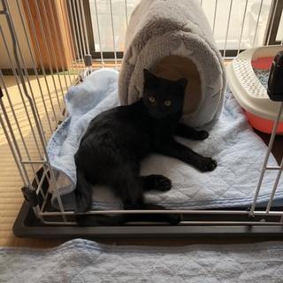 可愛い黒猫の男の子
